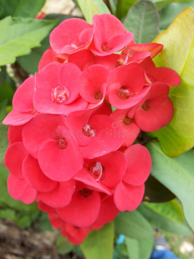 Flower5 photo stock