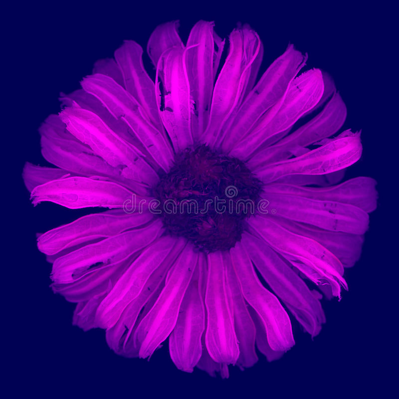 Flower. Purple flower with incredible detail, shallow depth of field and haunting beauty royalty free stock photo