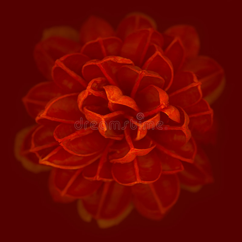 Flower. Red flower with incredible detail and shallow depth of field stock photo