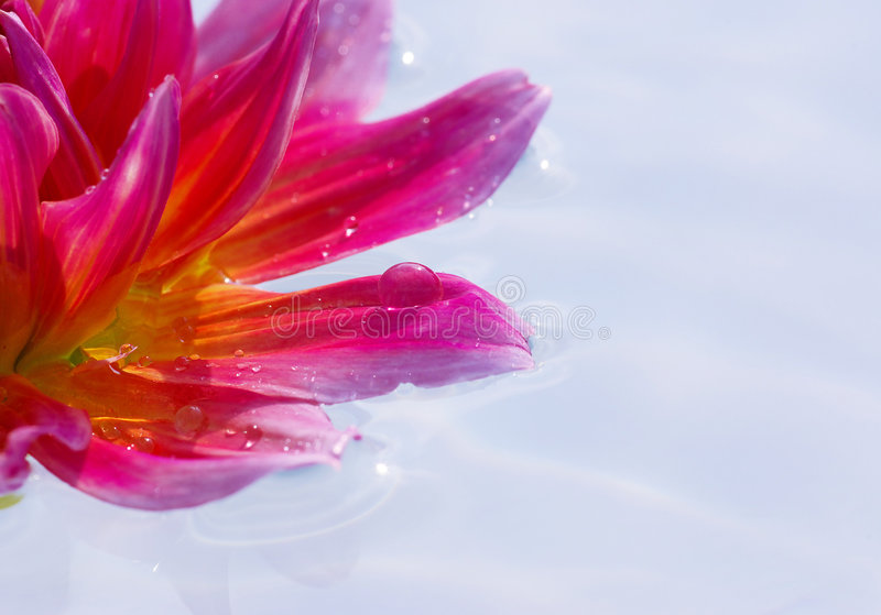 Download Flower Stock Photography - Image: 6449942