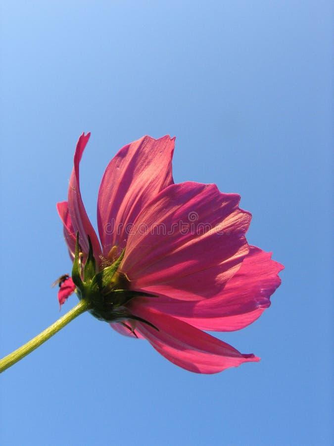 Free Flower Royalty Free Stock Image - 867176