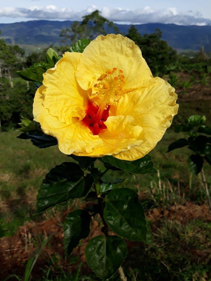 Flower0001 arkivbild