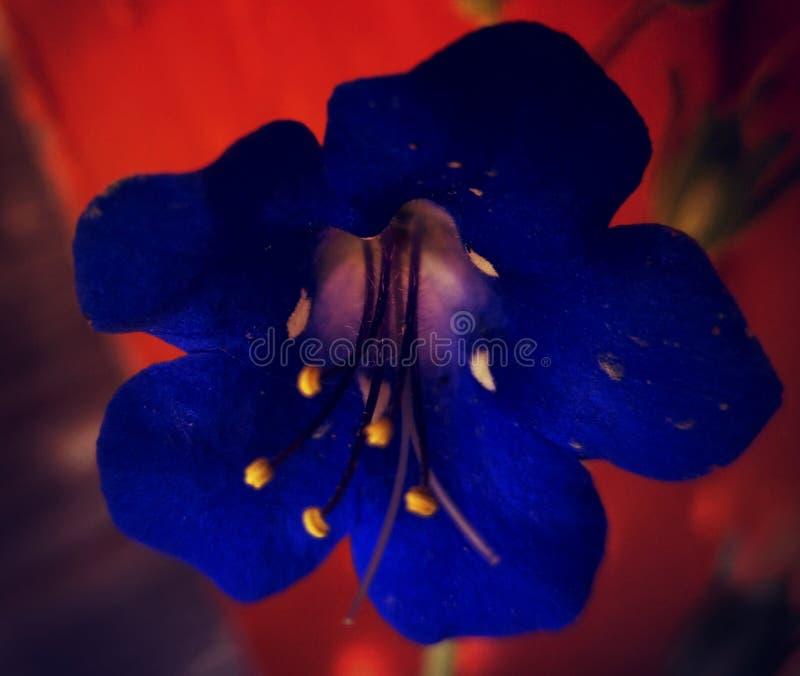 Flower2 免版税库存照片