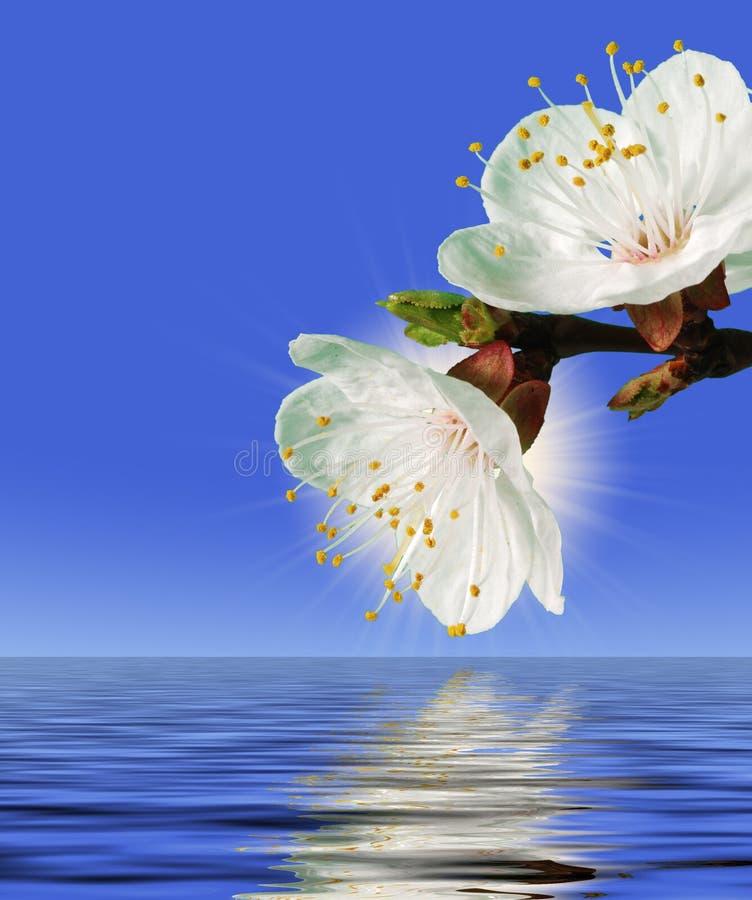 Download Flower above water stock image. Image of single, elegance - 4961801