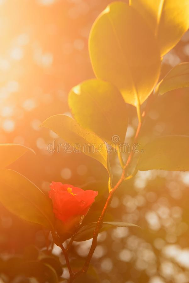 Free Flower After Rain Royalty Free Stock Photo - 103398385