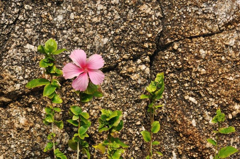 Flower Against Coarse Rock Background Stock Image