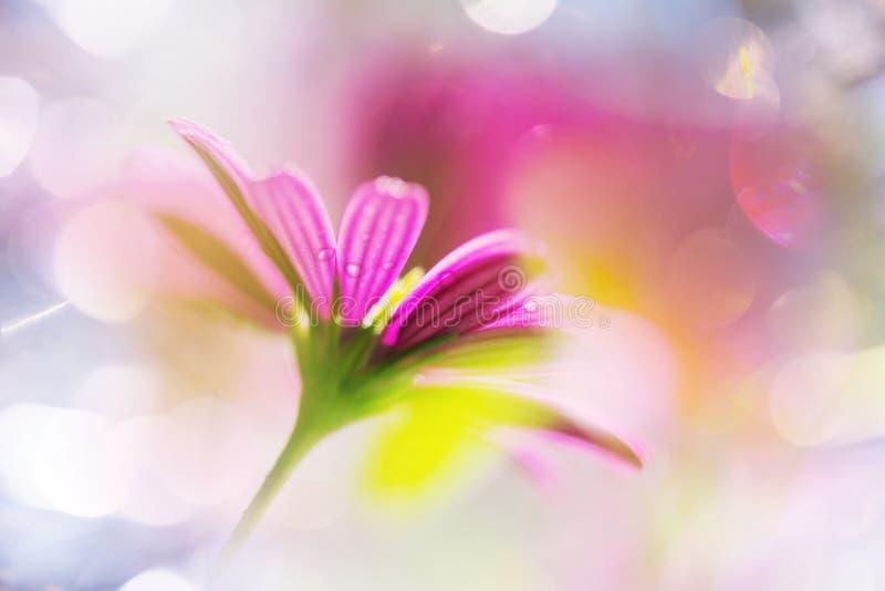 Flower. Amazing colorful flower royalty free stock photo