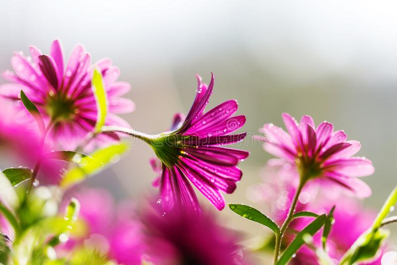 Flower. Amazing colorful flower stock image