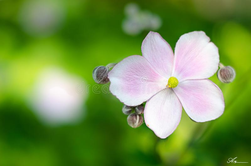 A flower amongst the summer breeze stock image