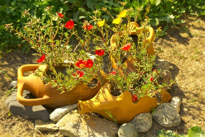 Flower in amphora stock photo