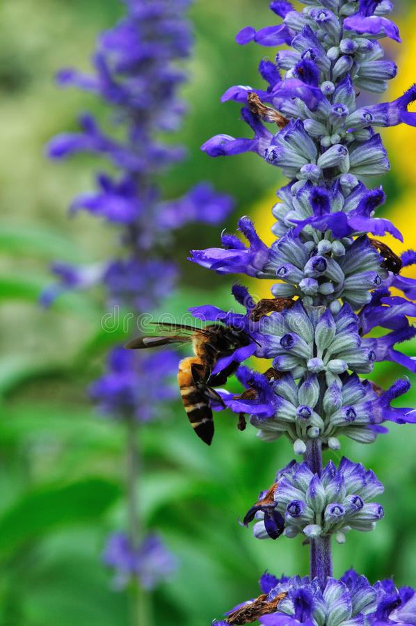 Free Flower And Bee Stock Photography - 17867522