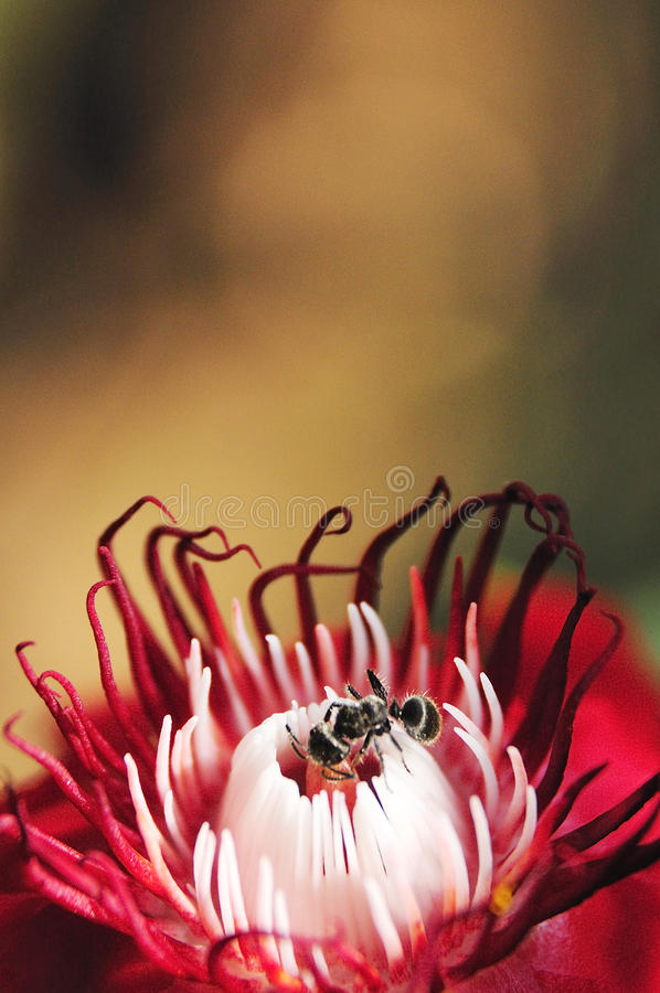 Flower with ant royalty free stock photography