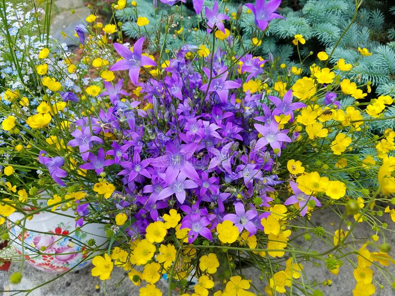 Flower arrangement in violet and yellow royalty free stock image