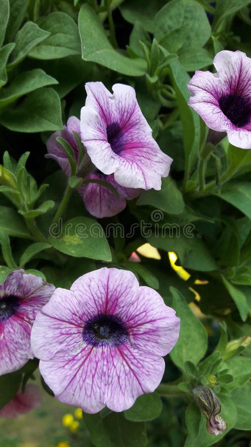 Flower asia in thailand winter weather royalty free stock image