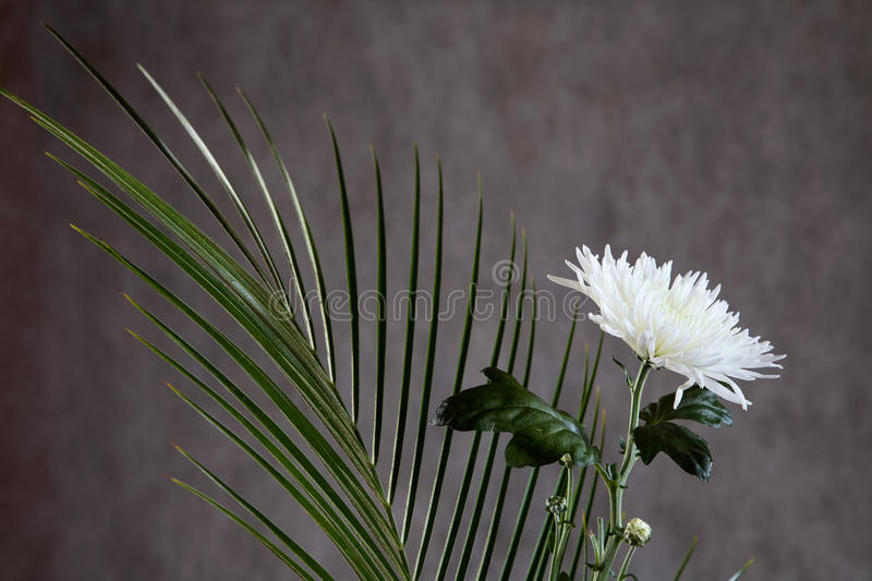 Flower Of An Aster With Leaves Royalty Free Stock Photo