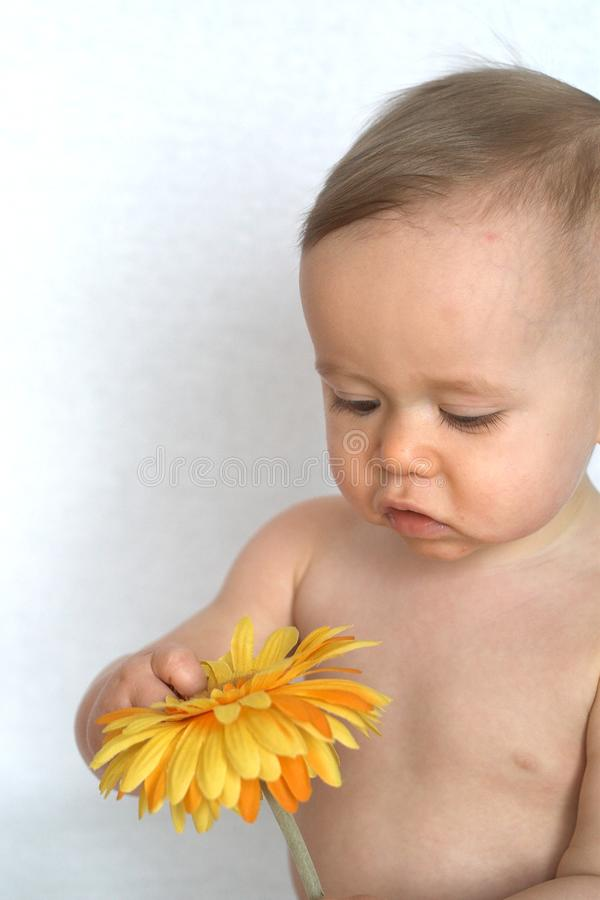 Flower Baby royalty free stock image