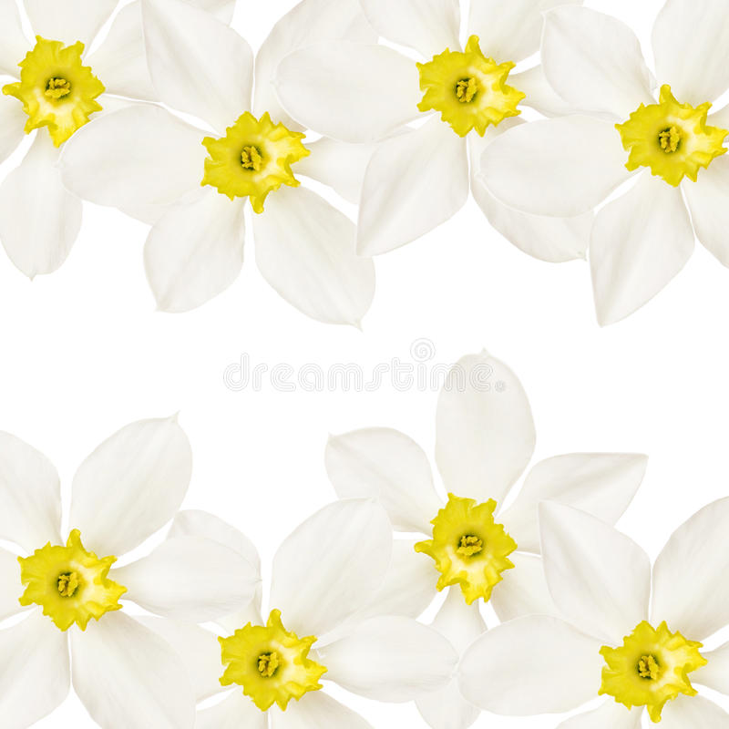 Download Flower background stock photo. Image of pattern, graphic - 19720120
