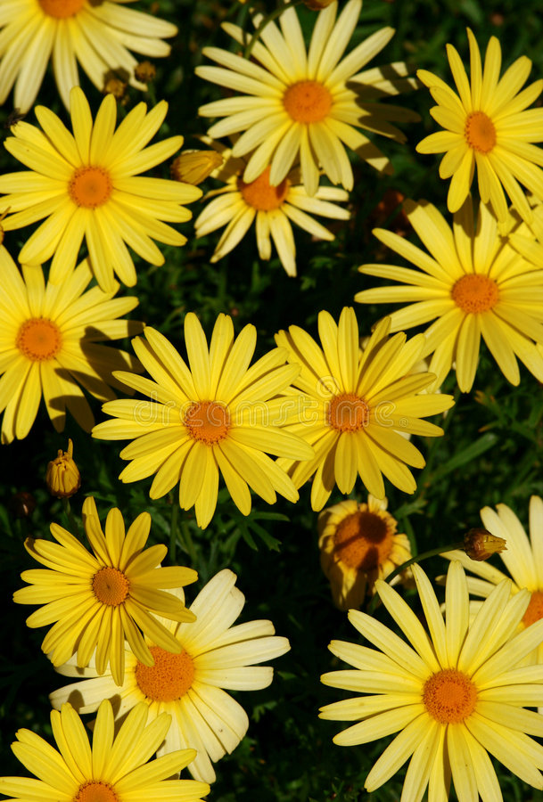 Free Flower Background Royalty Free Stock Photos - 238128
