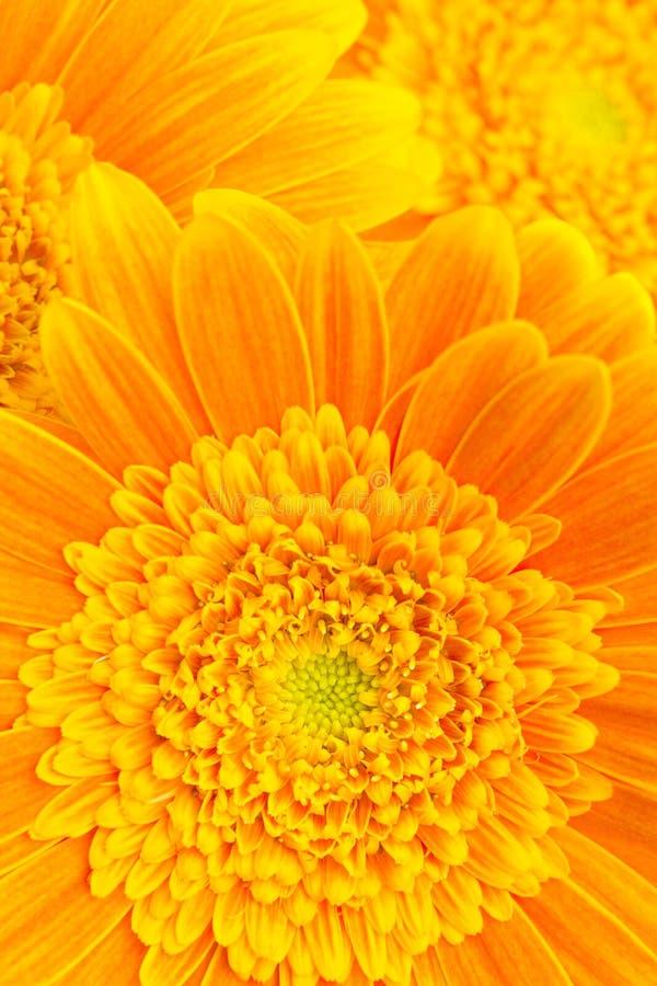 Download Flower background stock image. Image of botany, fresh - 2437323