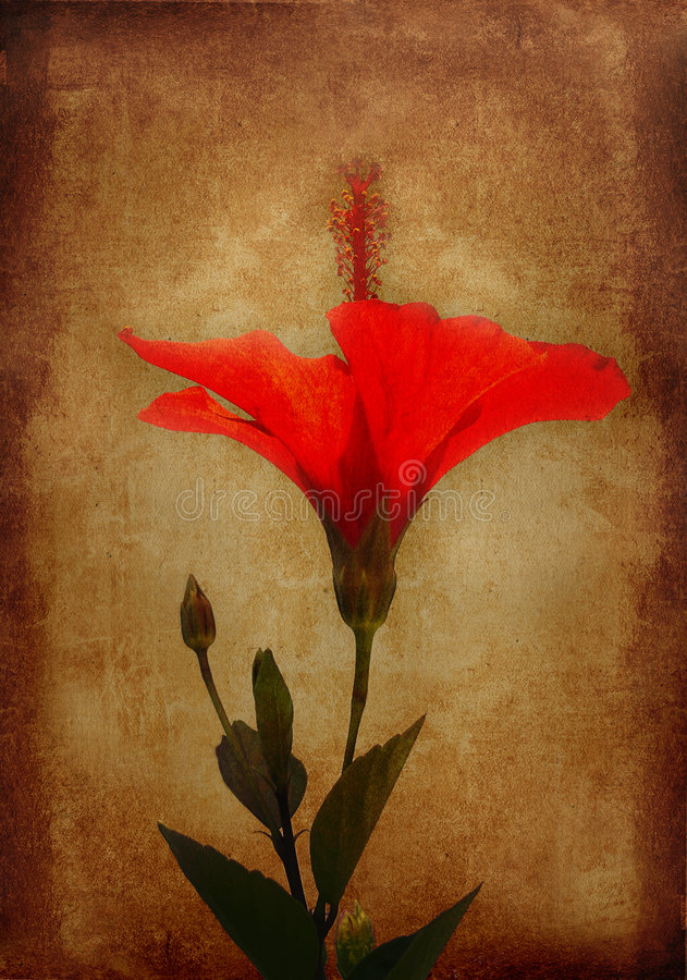 Free Flower Background Stock Images - 3305404