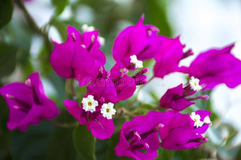 Flower background and purple color royalty free stock images