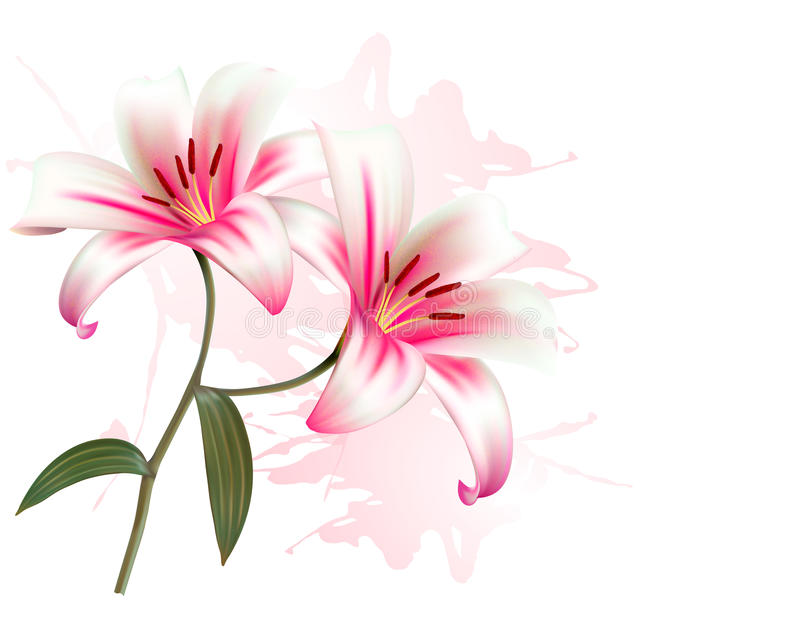 Flower Background With Two Beautiful Lilies. royalty free illustration