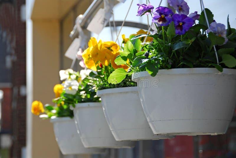 Flower baskets royalty free stock photos