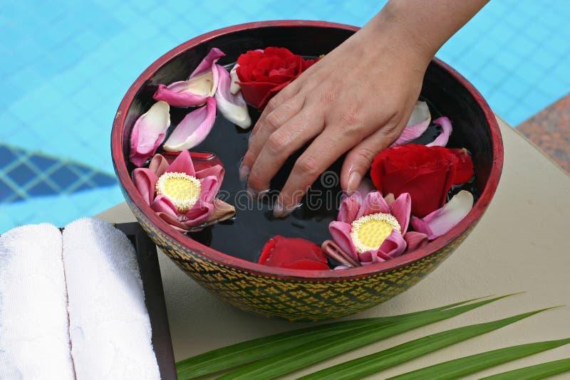 Flower Bath Stock Image