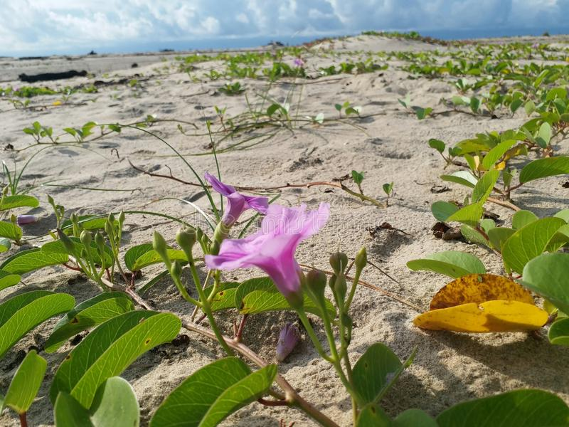 Flower in the beach. Advanture for sunrise in the Angsana beach royalty free stock photography