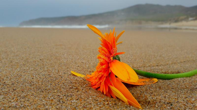 Flower at the beach. stock images