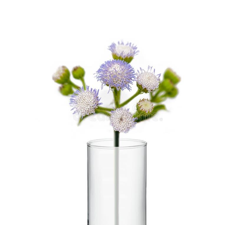 Flower in beaker, Test tubes with flower stock photos