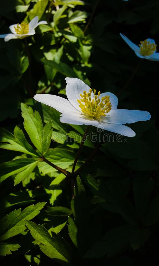 Flower beautiful june sunny flowers royalty free stock image