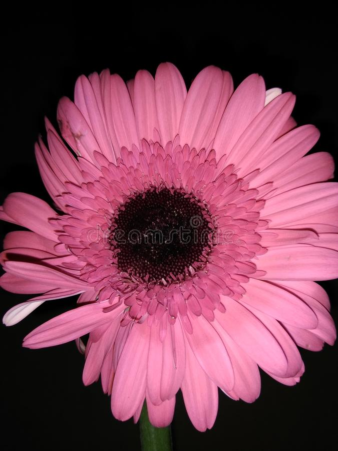 Flower. Beautiful flower, just a casual click stock photography