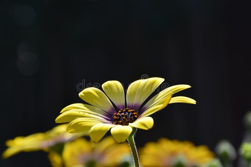 Flower. Beautiful flower outside in our garden stock images