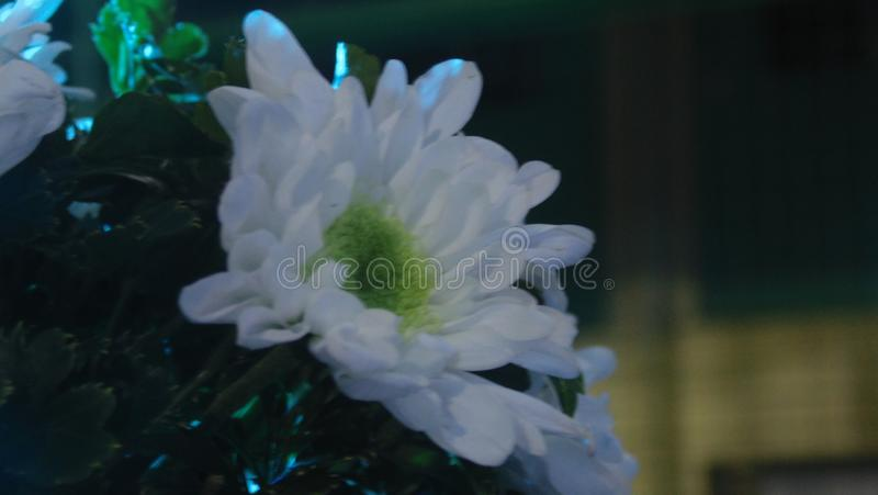 Flower. Is a beautiful part of a plant, its pleasing the eye of ones person stock image