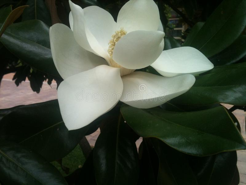 Flower. royalty free stock photo