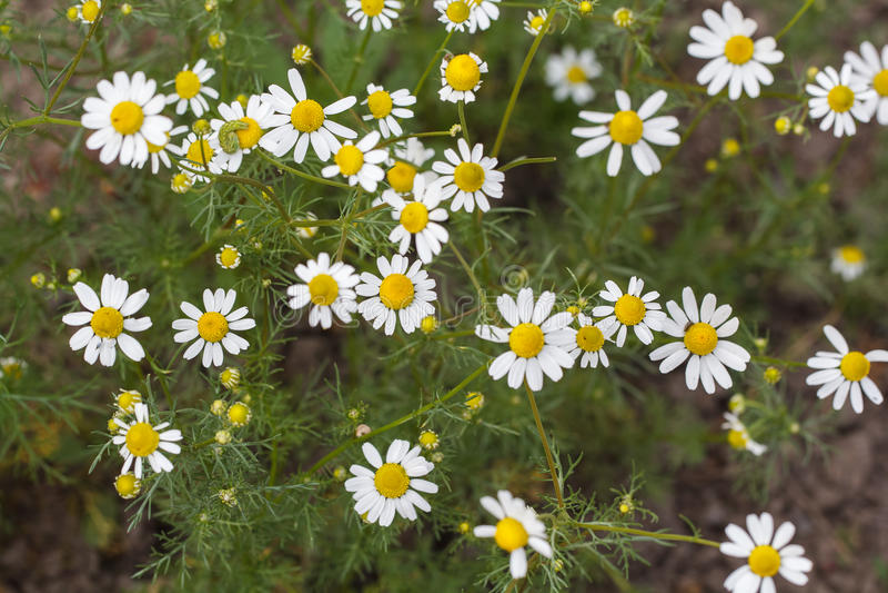 Flower. Beautiful white flower. Shallow depth of field stock photo