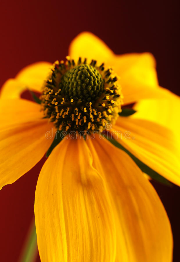 Download Flower stock photo. Image of closeup, flower, delicate - 34112948