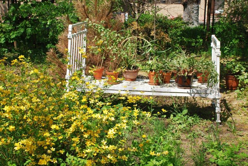 Download Flower bed stock image. Image of gardening, cottage, organic - 21976475