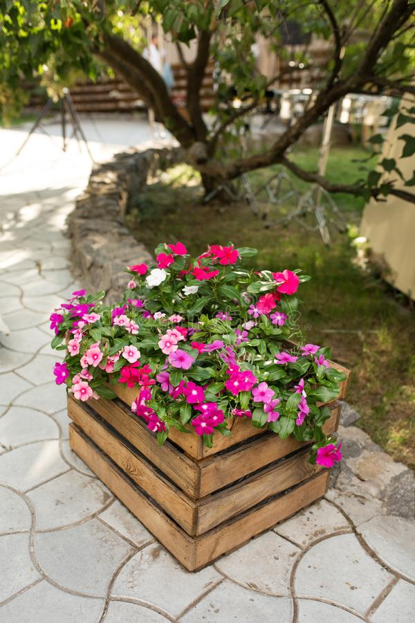 A flower bed with a beautiful pink and red flowers wooden box stands outdoors against the background of a tree and green lawn royalty free stock photo
