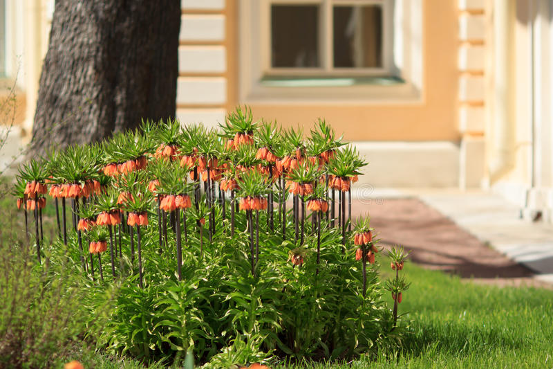 Flowers. Summer. Yard. royalty free stock photo