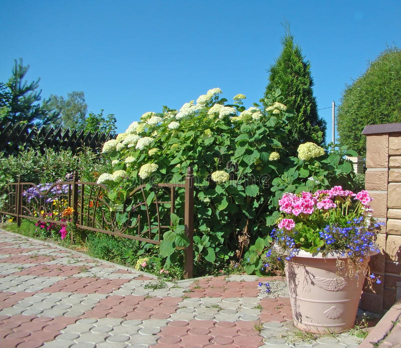 Flower bed and ornamental plants stock images image for Ornamental trees for flower beds