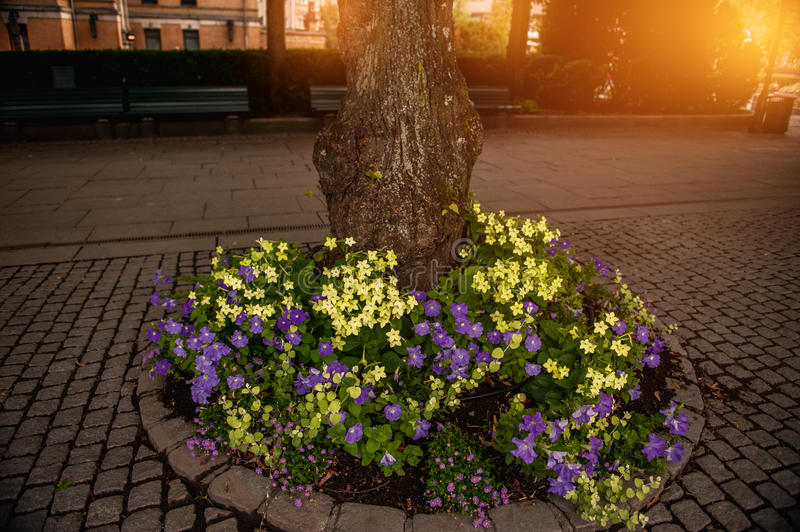 A flower bed of petunias and small flowers around the tree at sunset in the sun. stock image