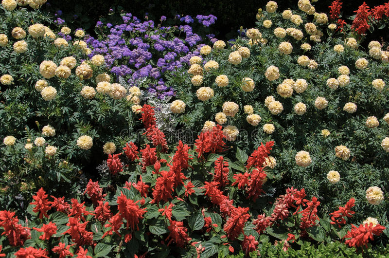 Flower bed with red, yellow, pink, white flowers royalty free stock photo