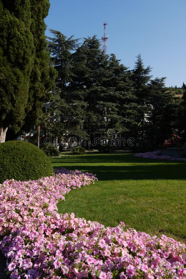 A flower bed with small pink flowers near a smoothly cut lawn ag royalty free stock photo