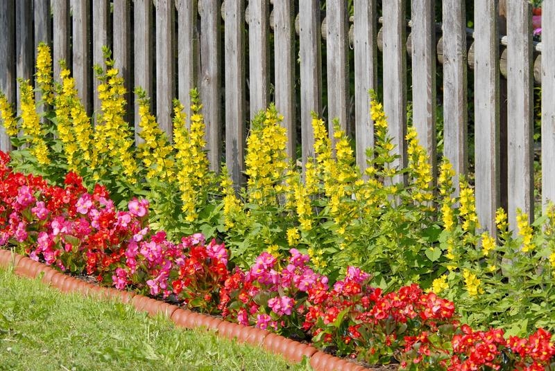 Flower bed. With wooden fence in a park stock images