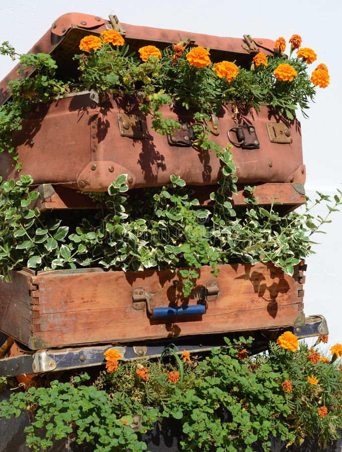 Flower beds in an old suitcase (travel, travel, travel agency, d stock photography
