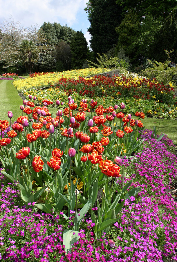 Download Flower Beds Park Garden Display Stock Photo - Image: 704198