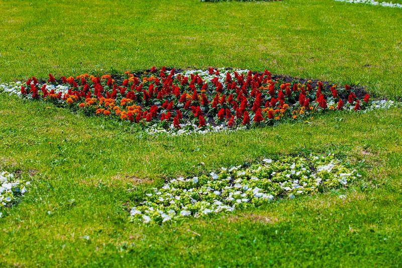 Flower beds in urban public places royalty free stock images