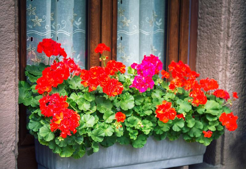 Flower beds in yards, on window sills. And balconies. Amateur floriculture of French cities royalty free stock photo